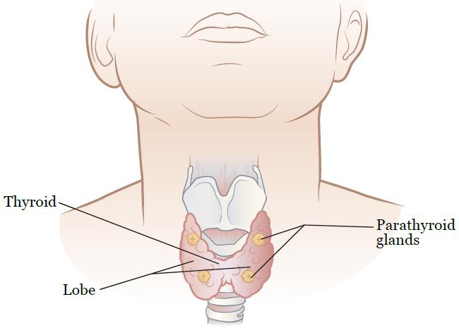 Операцию назначают, если в анамнезе имеется диффузный токсический зоб.